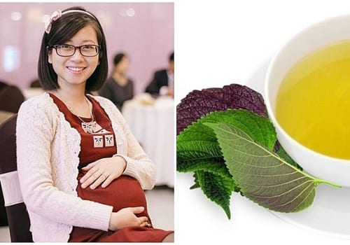 Uống lá tía tô trước khi sinh có tác dụng gì?