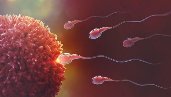 dấu hiệu tinh trùng gặp trứng | Món Miền Trung
