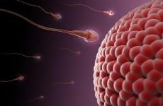 Tinh trùng gặp trứng có hiện tượng gì, bao lâu thụ thai