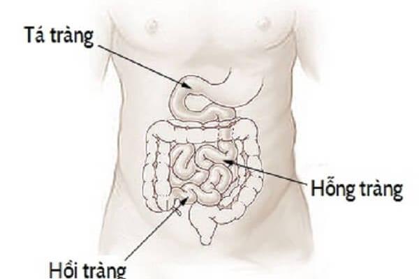 Quá trình tiêu hóa ở ruột non
