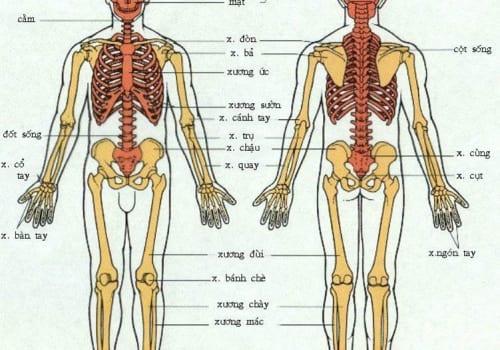 Bộ xương người làm mấy phần