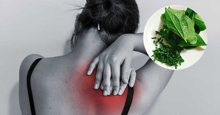Lá lốt giúp giảm đau lưng không?