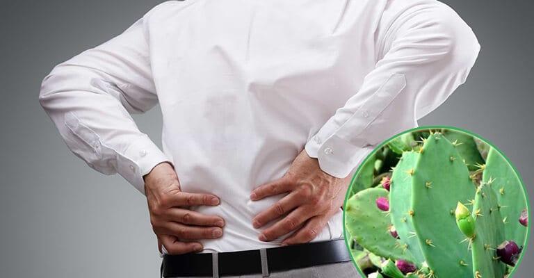 Xương rồng trị đau lưng không