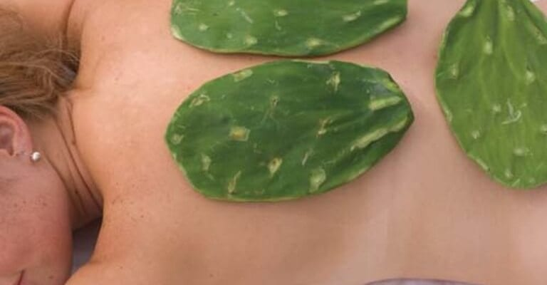 Cách chữa đau lưng bằng xương rồng có ưu điểm gì?