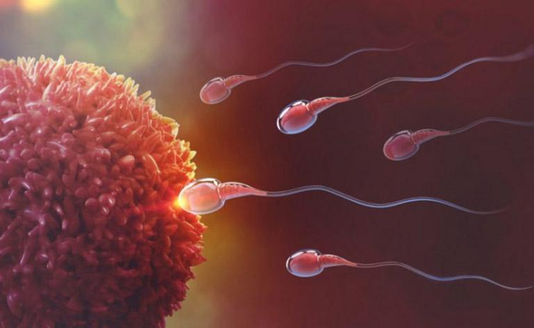 Xuất tinh sớm thì tinh trùng có yếu không?